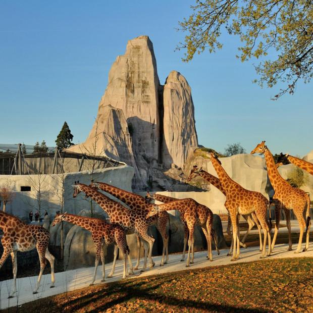 que-faire-autour-du-parc-zoologique-de-paris