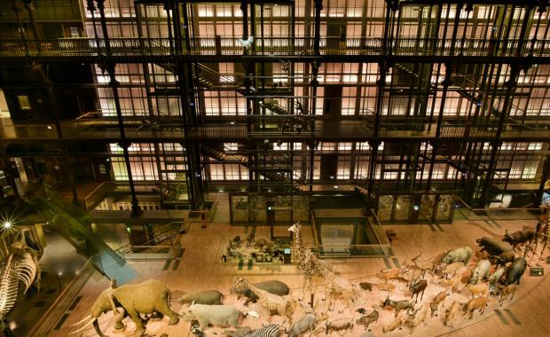 que-faire-autour-du-museum-national-dhistoire-naturelle